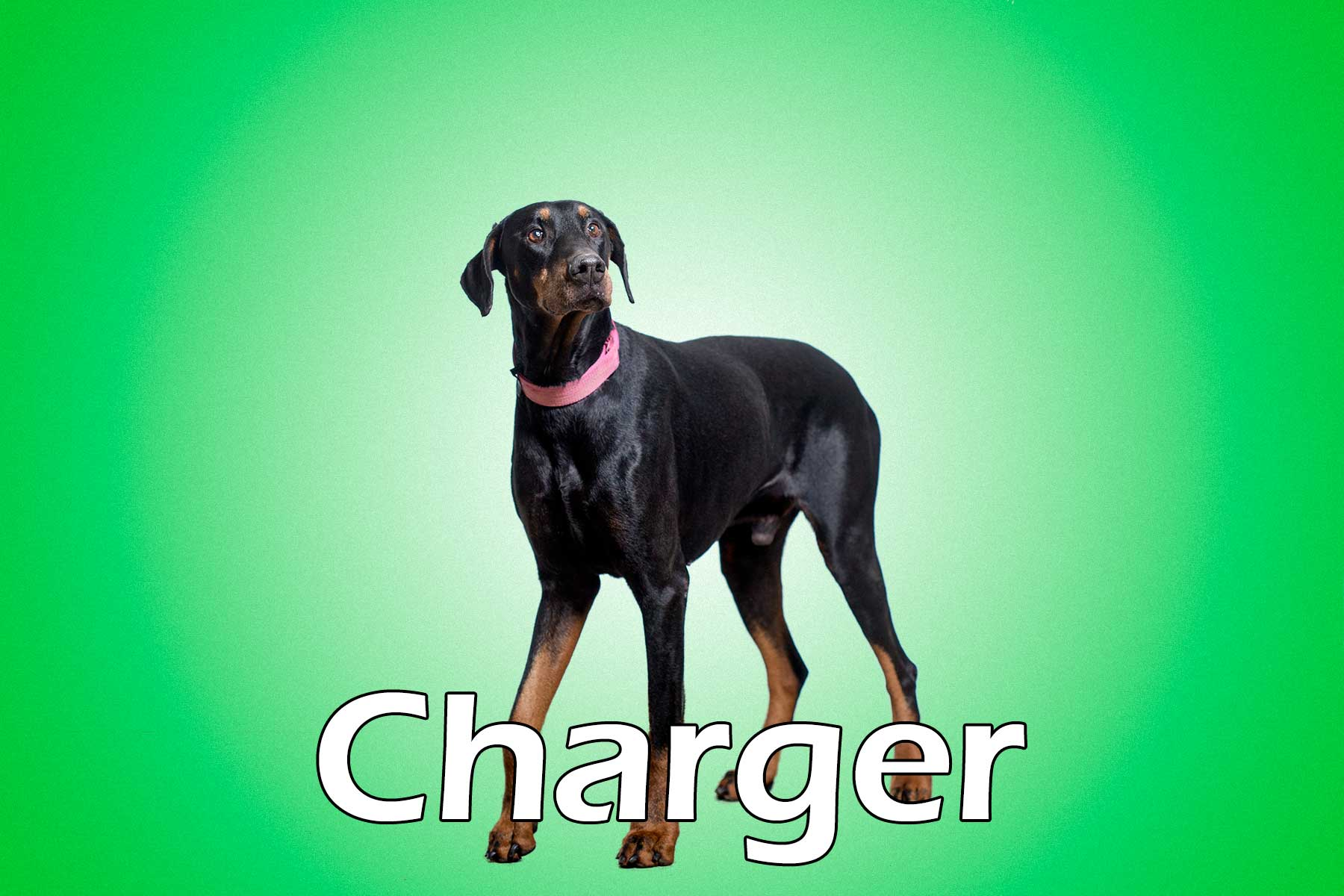 Charger_20160121_144042_052011001770_58580b2_Charger